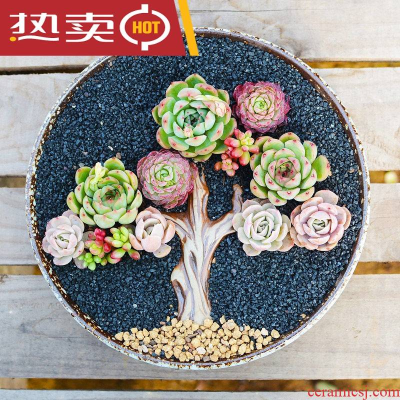 Large - diameter household extra Large fleshy flowerpot ceramic clearance package mail Large creative combination meaty plant flowers