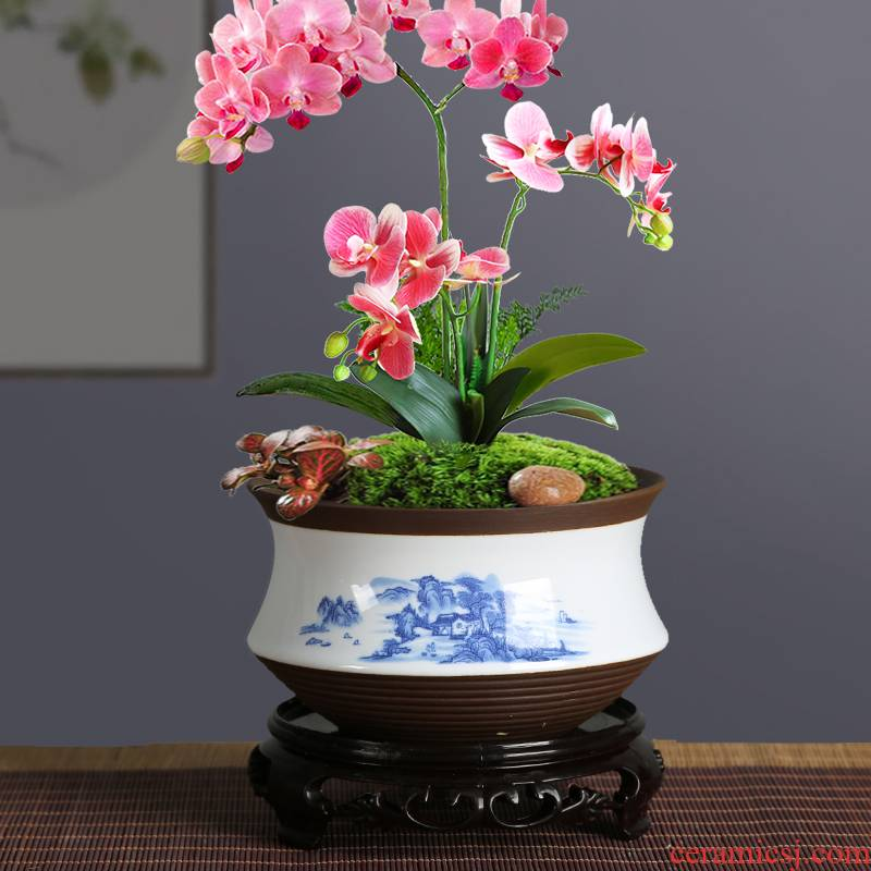 Blue and white porcelain flowerpot more meat special butterfly orchid with tray was creative large - sized ceramic basin of bracketplant, green potted orchids
