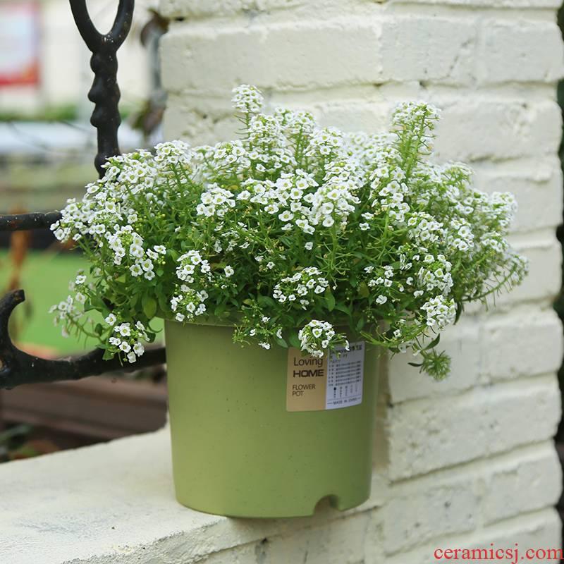 Imitation ceramic type deep basin creative gallons Deepot four seasons resin plastic fleshy money plant flower pot Nordic contracted