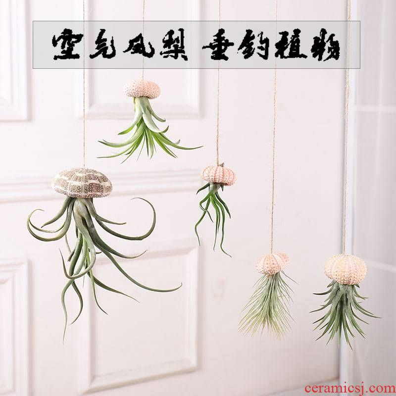 Air pineapple soilless hanging shells creative potted the plants the office green plant flowers and the plants base stents flowerpot