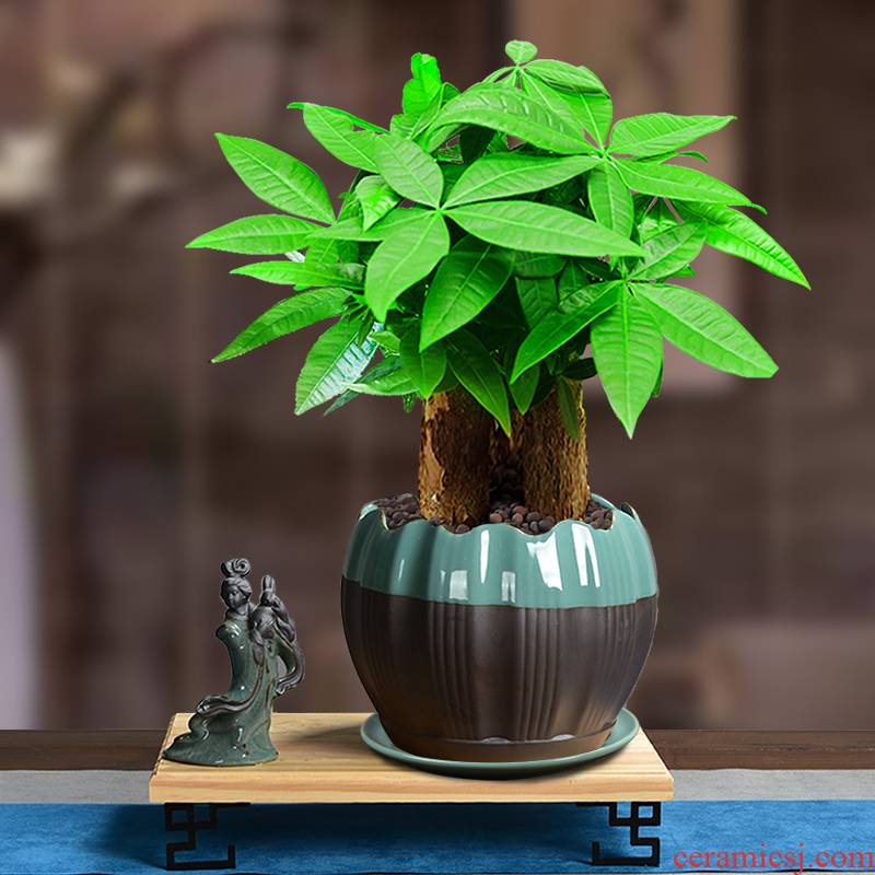 The elder brother of The ceramic up open a piece of rich tree butterfly orchid green plant with big flowerpot mage, fleshy tray was preferential contracted combination