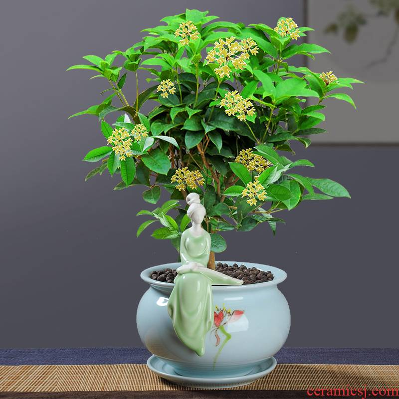 Large ceramic flower pot in special zone tray celadon, fleshy bonsai gardening contracted money plant green plant orchid combination