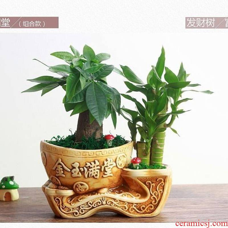 He potted lucky bamboo tree podocarpus with ceramic potted indoor desk green small potted the plants