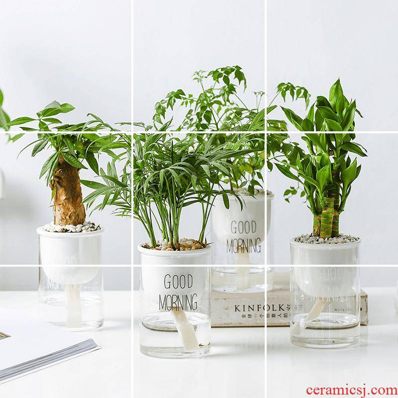 A hydroponic automatic suction flowerpot creative ceramic transparent glass container, fleshy potted indoors contracted desktop flowerpot