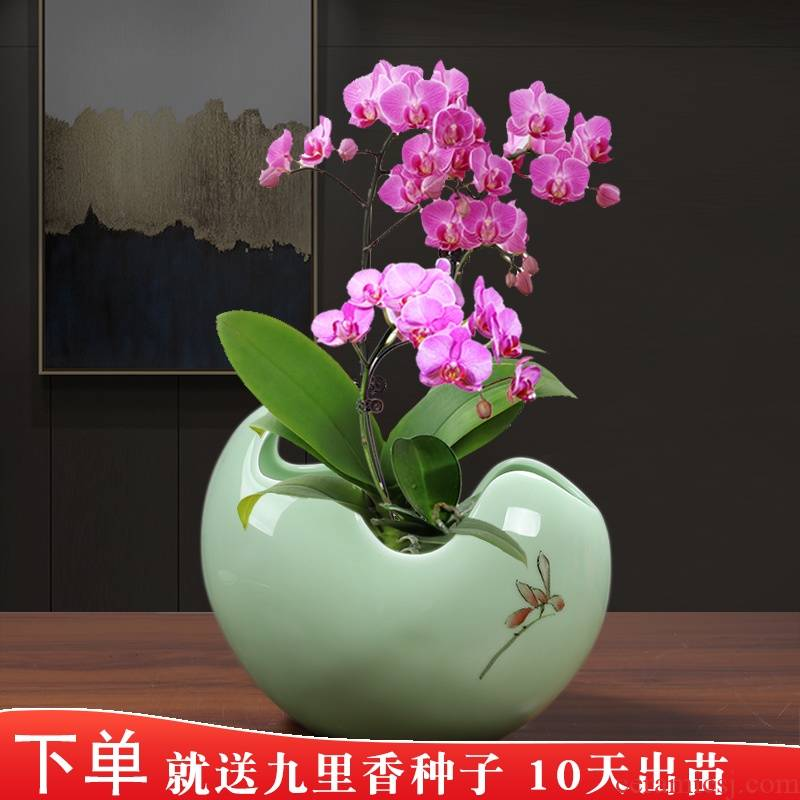 Butterfly orchid special ceramic flower pot celadon glaze hand made contracted individuality creative gentleman orchid large tray