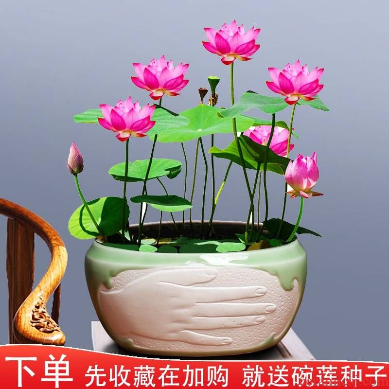 Ceramic hydroponic flower pot copper bowl lotus lotus grass withered lotus refers to no Kong Hua fish scenery new suit