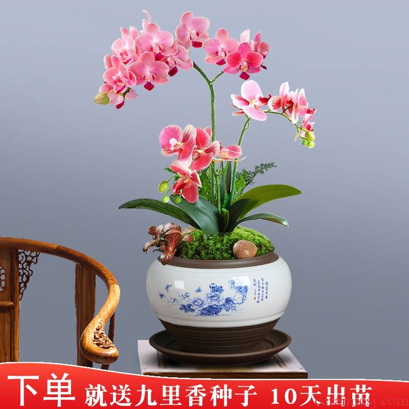 Special jingdezhen ceramic butterfly orchid flower POTS clivia miniascape fleshy green plant pot new money plant of blue and white porcelain