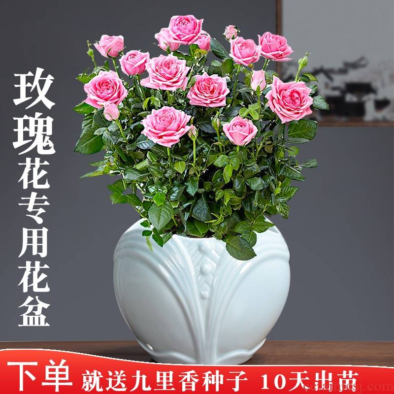 Rose, Rose, special ceramic celadon pot green plant glaze color move contracted Chinese breathable with tray
