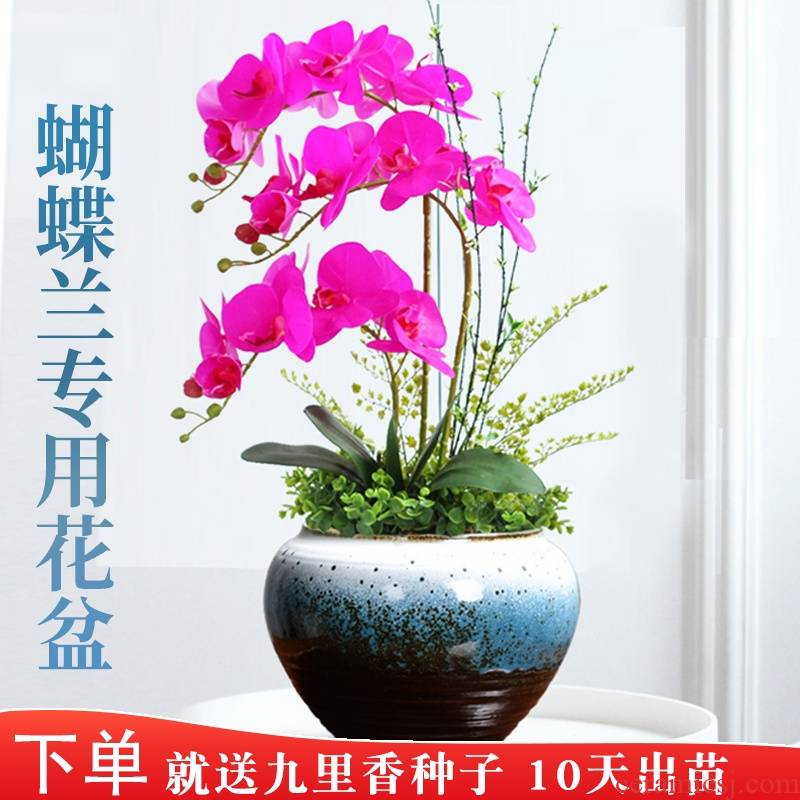 Butterfly orchid special ceramic flower pot shape fleshy large violet arenaceous basin with tray was tire coarse pottery breathable art move