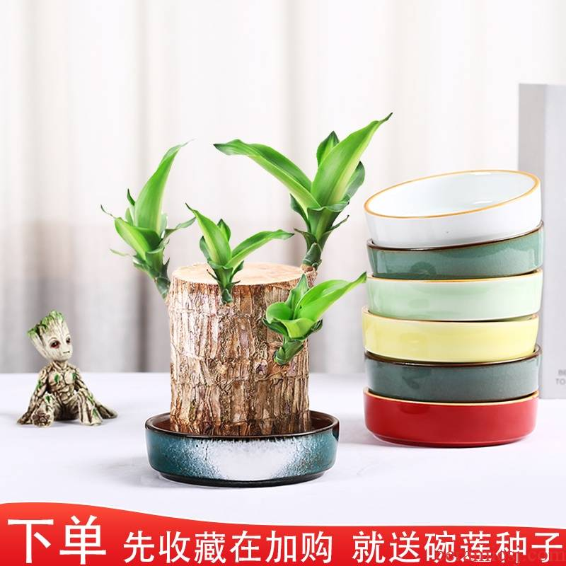 Brazilwood dedicated pot lucky lucky bamboo moss wood micro ball potted landscape landscape hydroponic ceramic ware