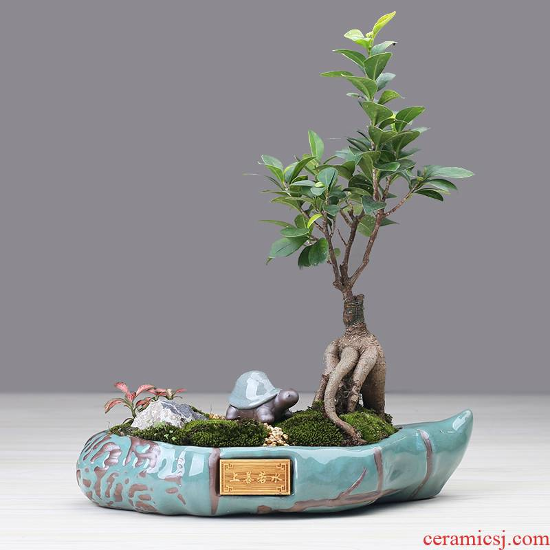 Violet arenaceous classical pot Chinese wind restoring ancient ways is rich tree asparagus bonsai the plants indoor creative move more meat basin