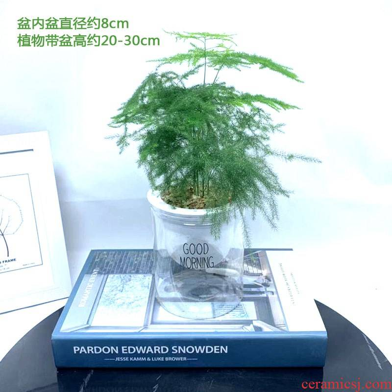 Asparagus flower pot indoor desktop sitting room balcony evergreen the plants beautiful ceramic POTS miniature bonsai the plants