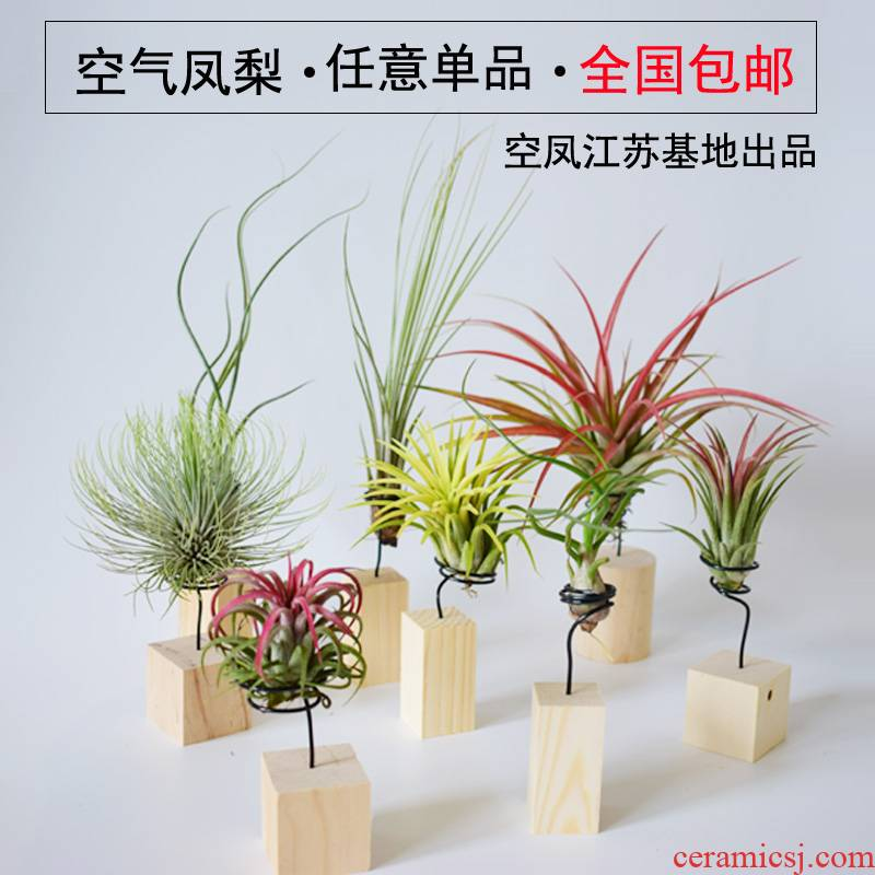 Air pineapple office desktop soilless potted the plants in addition to formaldehyde flowers contain base stents, green plant