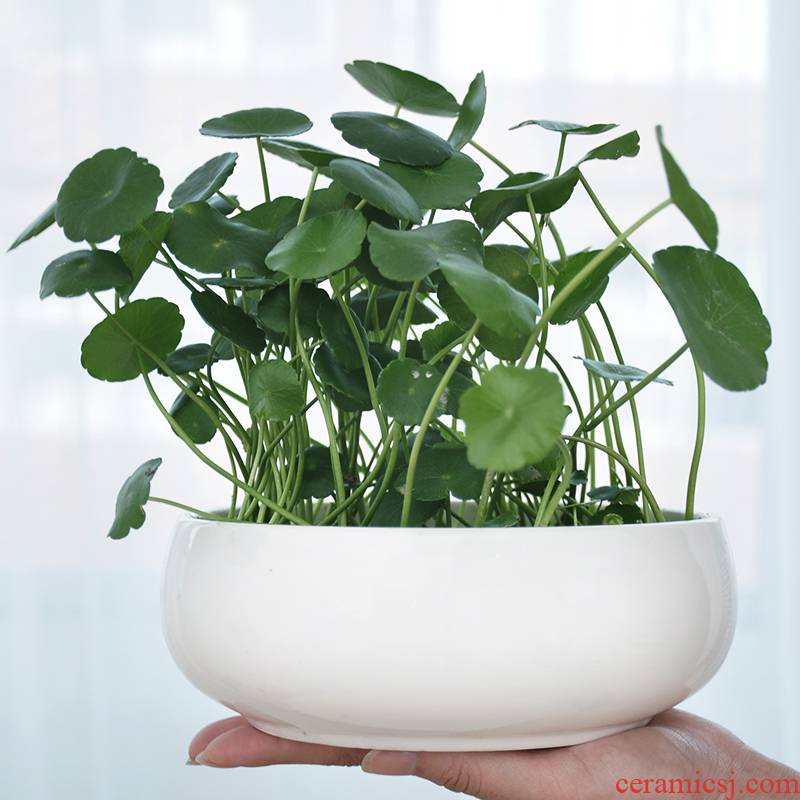 Buy xi refers to flower pot without hole, large copper bowl lotus lotus grass green plant of large diameter ceramic water basin is on sale