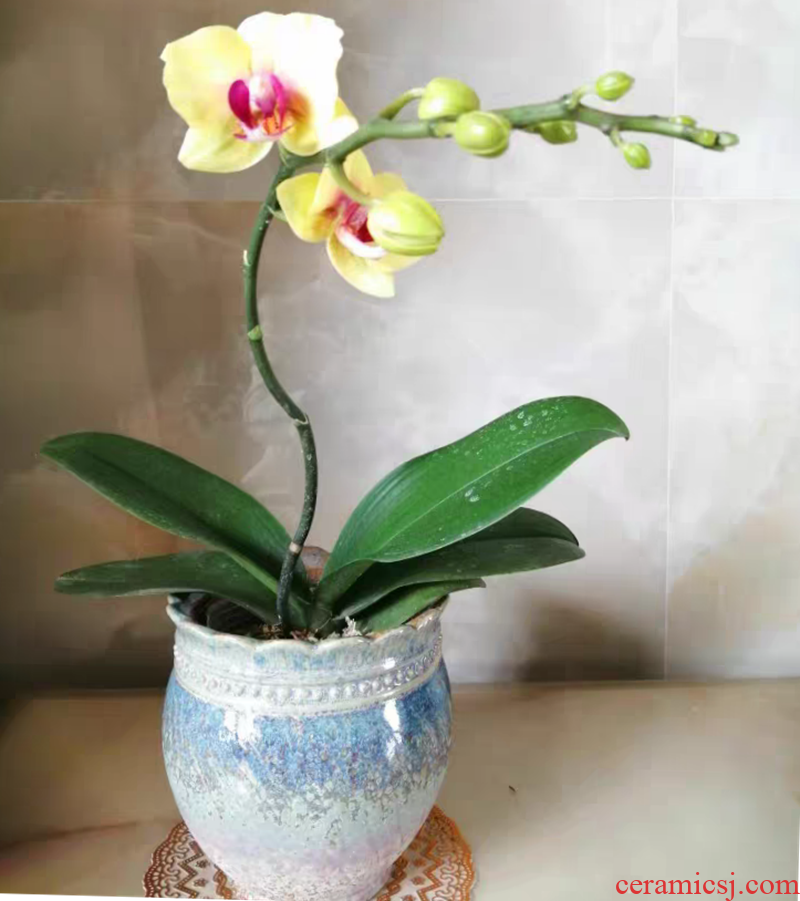 Large orchid rose mint more than other high meat meat jasmine flower pot pottery basin of the old running the package mail special offer a clearance