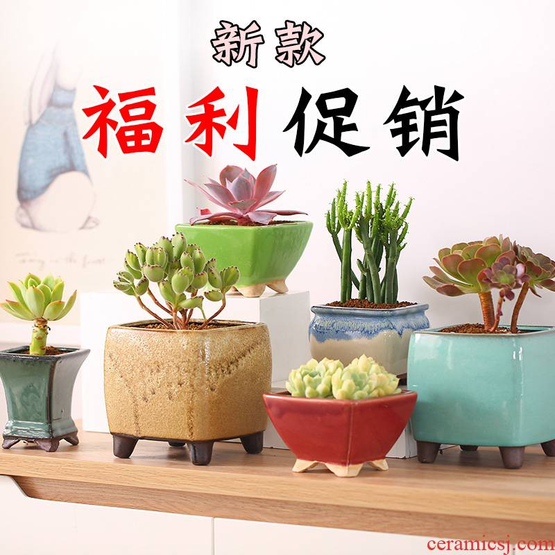 More coarse pottery flowerpot More meat the plants green plant ceramic contracted individuality creative waist drum four square purple sand pot