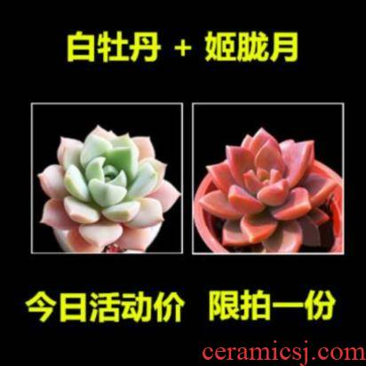 Many express little meat meat meat basin flower pot porcelain Chinese large - diameter move purification with tujia with other more breathable