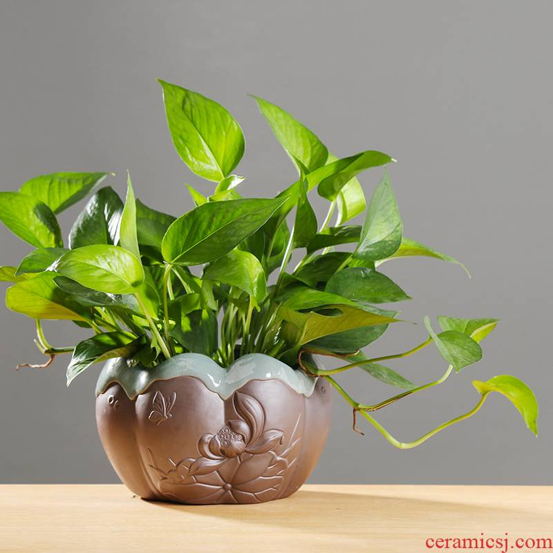 Copper money plant grass daffodils hydroponic flower pot indoor aquatic the plants vases, pottery classical creative move