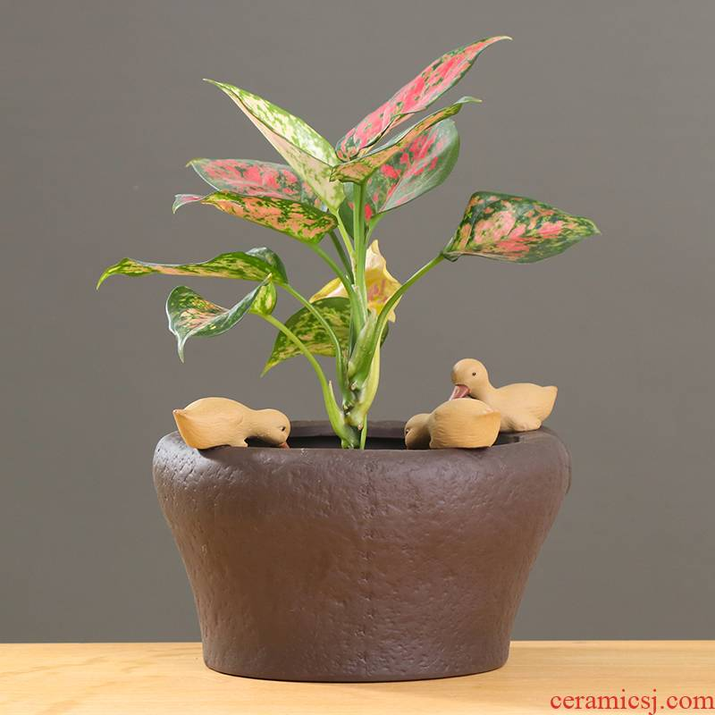 Other professional copper grass hydroponic flower pot ceramic creative indoor water restoring ancient ways with no hole, contracted a daffodil vessels
