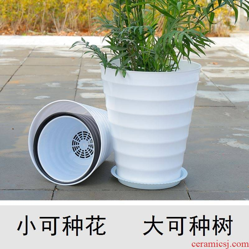 The Universal money tree type thread imitation porcelain rich tree flower pot home sitting room office working in the water to save water