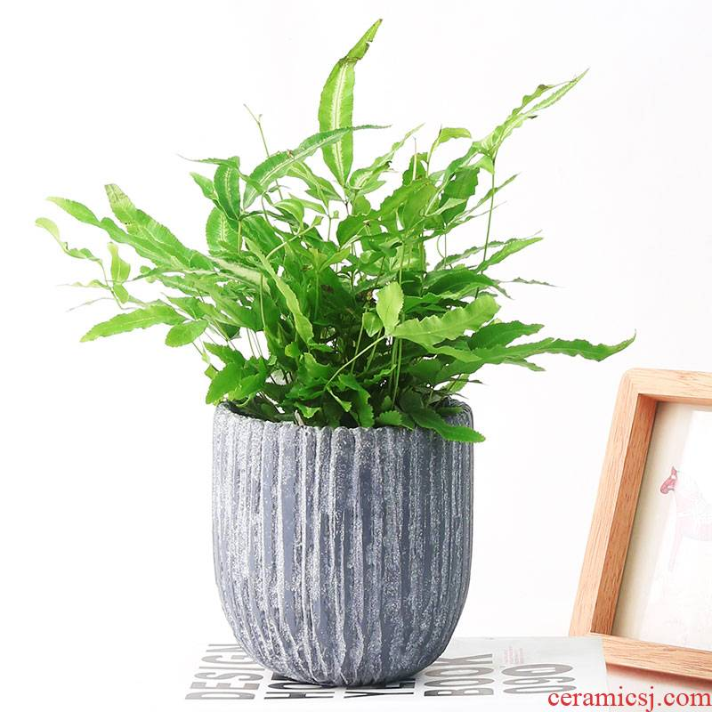 Rich tree flowers potted cement money plant flower pot biscuit firing indoor ceramic basin contracted strawberry seedlings, fleshy
