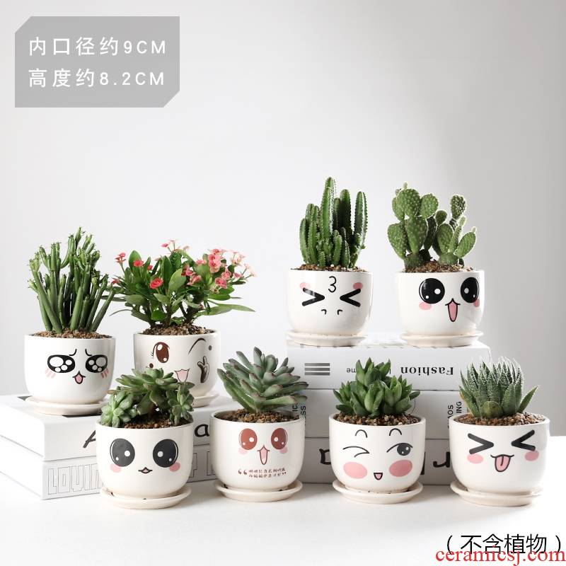 More meat flowerpot More than creative cartoon flower pot the plants ceramics small lovely indoor flesh POTS move type