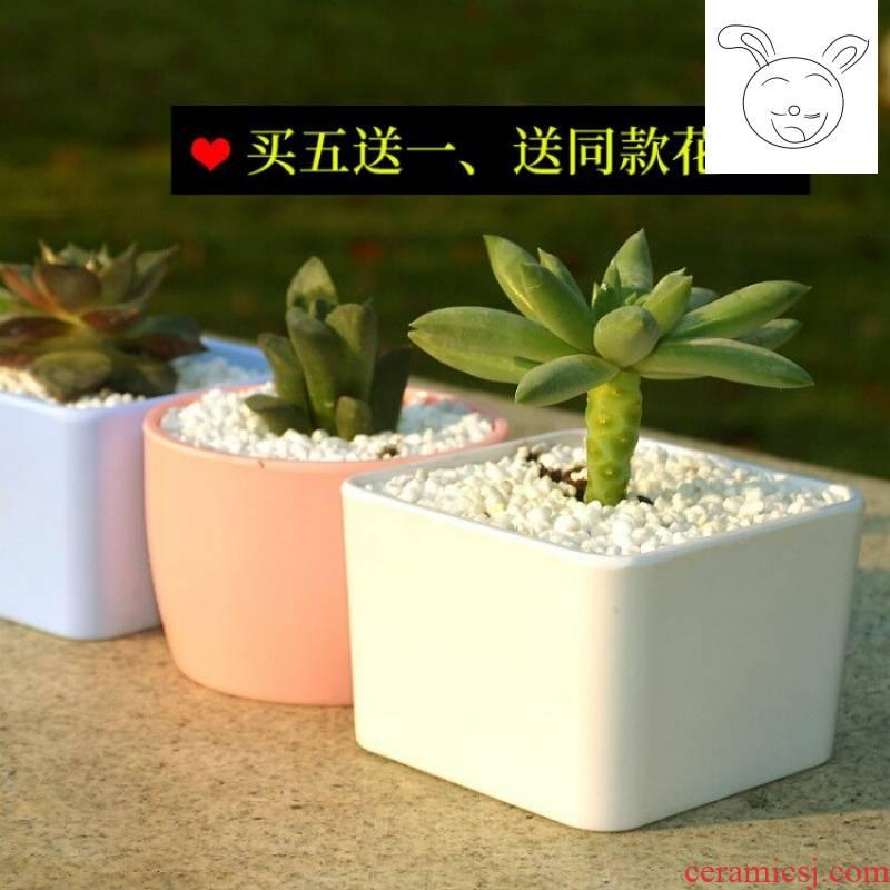 Flowerpot more meat Flowerpot melamine Flowerpot square plastic flower POTS candy color the balcony Flowerpot imitation ceramic POTS