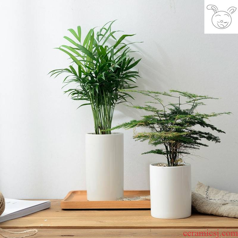White flower pot ceramic basin of contracted high high indoor household household balcony meaty plant asparagus flower pot