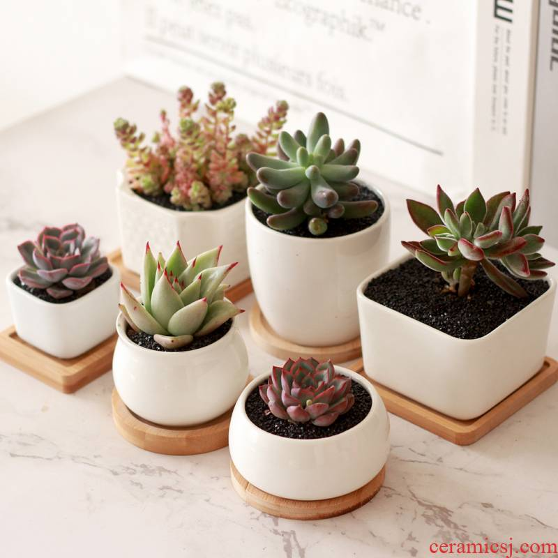18 package mail fleshy ceramic flower pot white porcelain bowl with bamboo shape of more optional desktop small green plant more meat basin