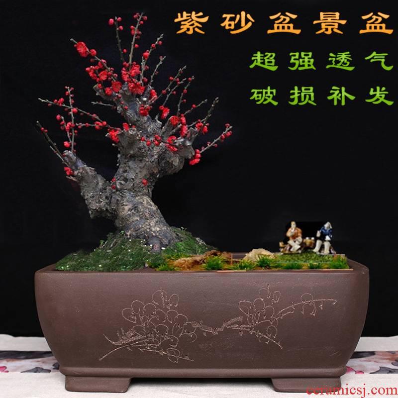 Wintersweet flowerpot name plum flower miniascape of special heavy flowerpot long big flowerpot ceramic long rectangle