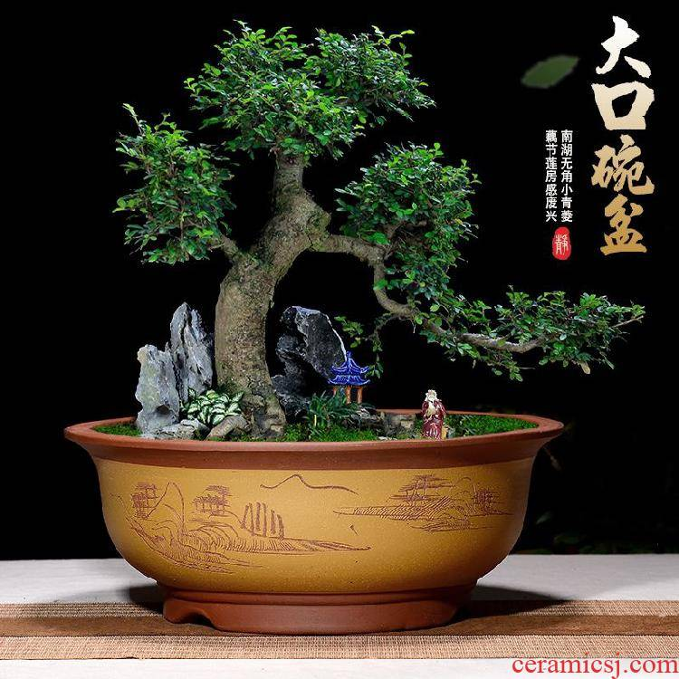 Violet arenaceous super - large diameter round bowl tub old running the fleshy indoor potted flower pot sitting room to the balcony planting trees bonsai pot
