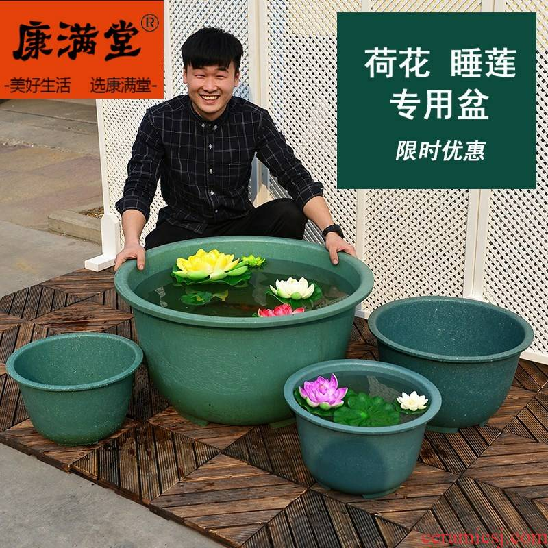 Species even OuHua basin water lily of the tank to keep water lily 's special pot fish more pinkish red pot lotus root plant POTS