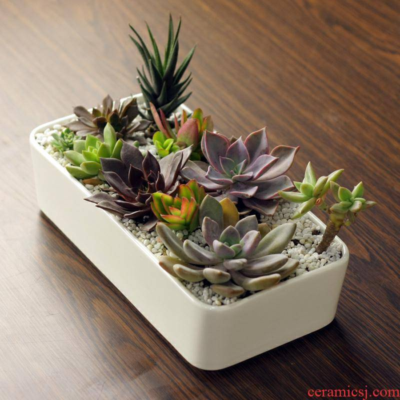 Extra large type control white creative faceplate meat platter flowerpot more large rectangular potted ceramic flesh POTS of the plants