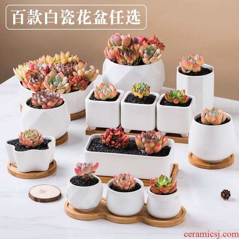 Flowerpot white ceramic POTS of Flowerpot more meat the plants more rectangular creative contracted fleshy white porcelain flower pot